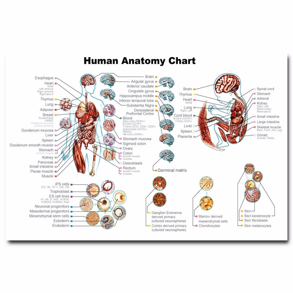 J2948 Human Anatomy System Body Map Medical Science Pop 14x21 24x36