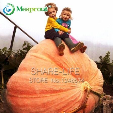 is a pumpkin a fruit white house fruit farm