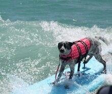 Dogs Lifejacket