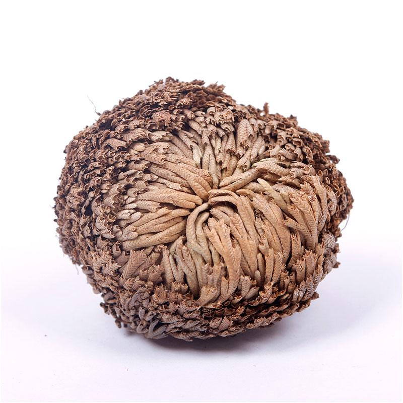 яванский мох живой с доставкой в Россию