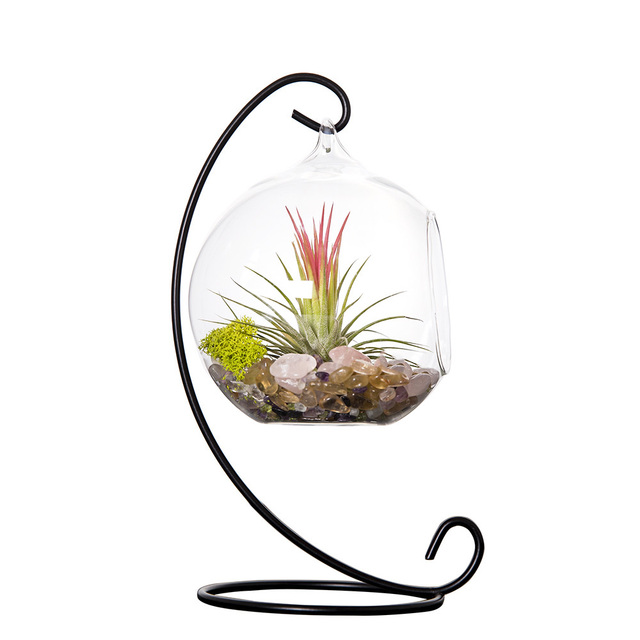 mkono air plant terrarium airplants glass vase succulent terrariums container table plants planter with metal stand