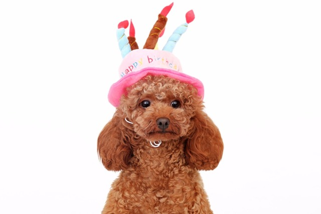 New Design Pet Dog Cat Birthday Hat Doggy Lovely Caps Dogs Cats Party Hats Puppy Grooming