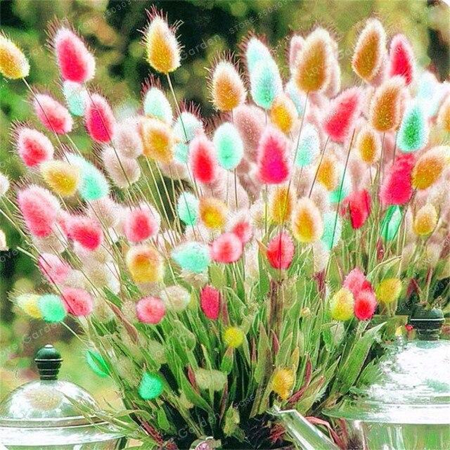 100 قطع أرنب ذيول العشب بونساي الملونة العكرش بونساي الزينة الأعشاب بونساي للمنزل حديقة أصائص زرع ديكور