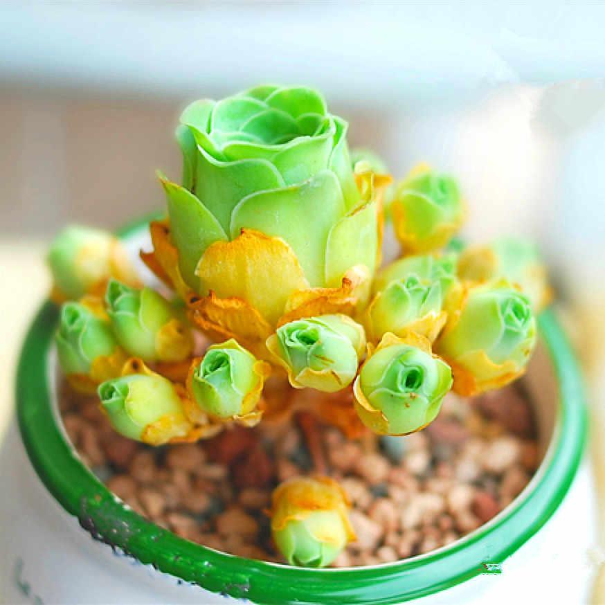 100 шт микс литопс бонсай живые камни цветок сочный кактус органическое растение для домашнего сада