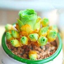 100pcs Mix Lithops bonsai Living Stones Flower Succulent Cactus Organic Plant Home Garden