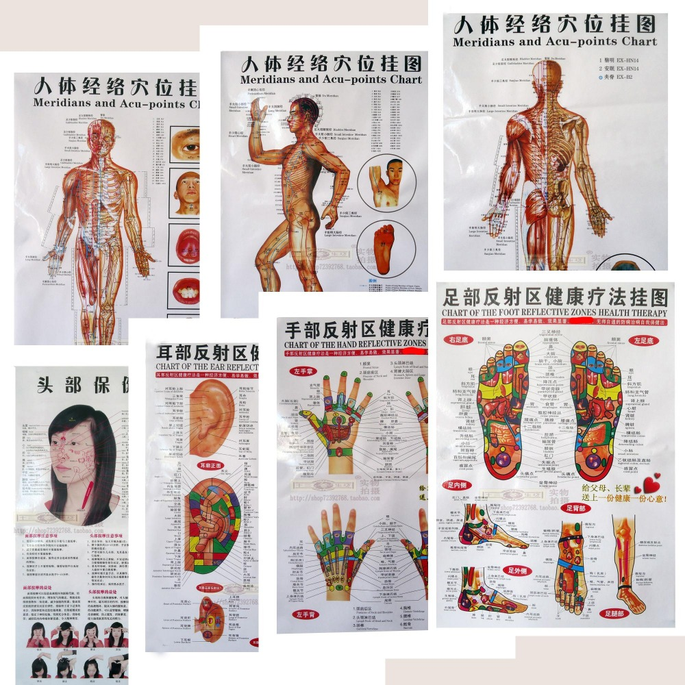 3 7pcs Body Acupuncture Points Charthuman Meridian Gut Maphuman