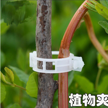 50pcs Durable Plastic Sling Fastener Clips Plant Tomato Vegetable Farming Clip Garden Pruning Tools Free Shipping