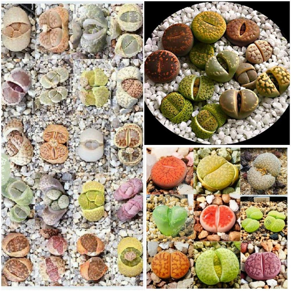 online buy wholesale mini cactus from china mini cactus wholesalers. Black Bedroom Furniture Sets. Home Design Ideas