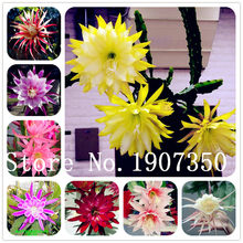 Hardy plant Cactus Succulents Plants Ball Cactu mixed colors of flower perennial bonsai plant embellishing home 300pcs/bag(China)