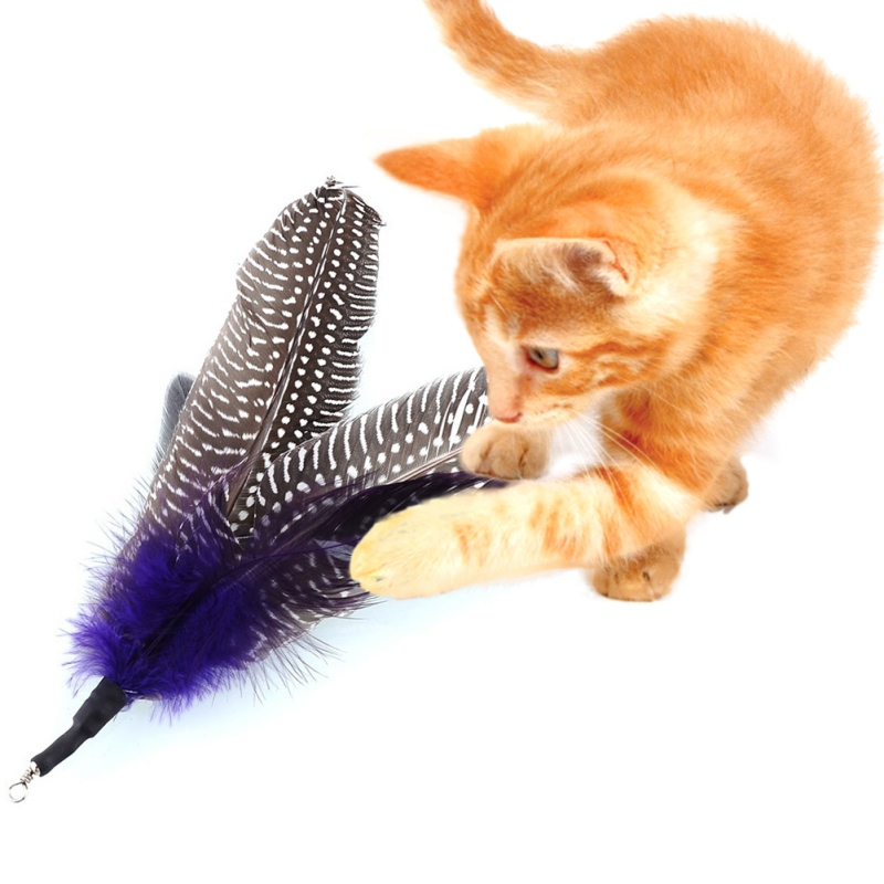 New 5/Pcs Pet Cat Toy Interesting Purple Feather Tease Cat Wand Home Interactive Toys Play With Cat