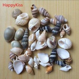 HappyKiss набор забавных морских раковин, раковины для аквариума, Морской Декор, украшения из натурального мини-раковины в средиземноморском стиле