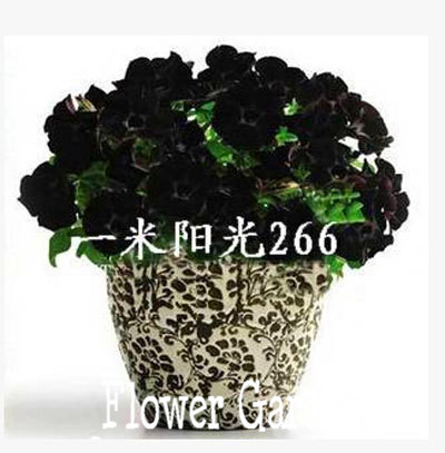 24 kinds hanging petunia seeds,garden Petunia, Petunia Seeds, Mixed color - 200 seeds/lot,#064HDU