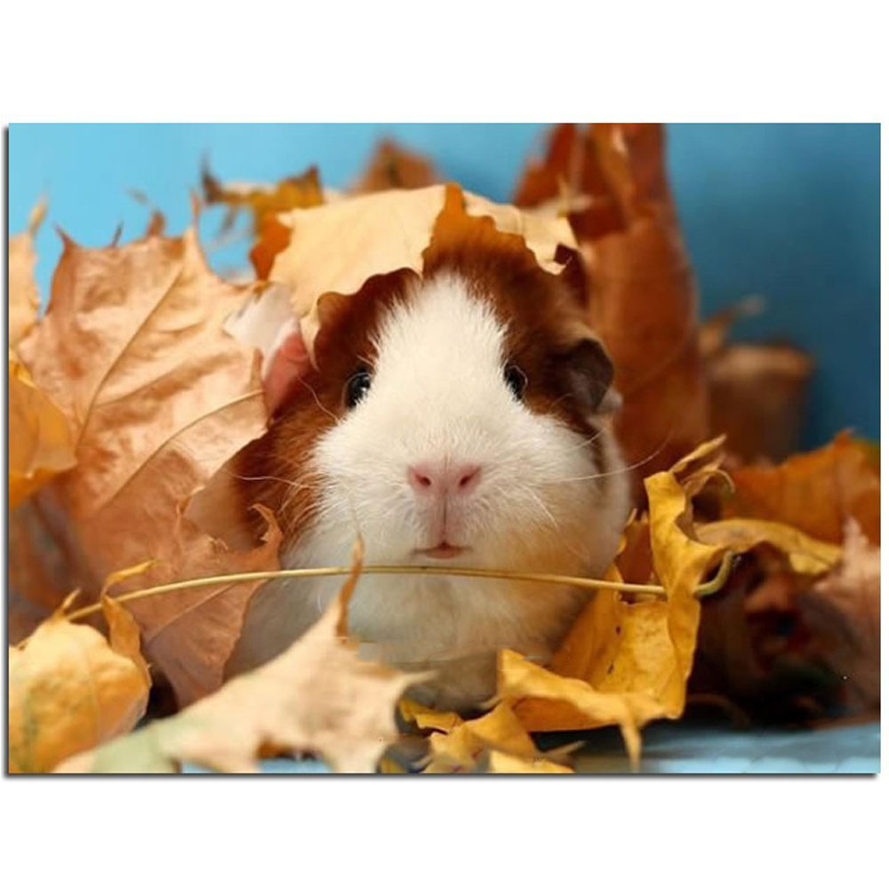 Cute Animals For Sale - Diy diamond painting animals cute guinea pig cross embroidery stitch kits square drill full rhinestone patchwork
