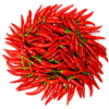 Vegetable Seed Chile Seed Red Hot Chilli Seeds Sowing Seeds Of Potted Vegetables Balcony