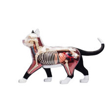 4d Cat Animal Anatomy Model Skelekon Medical Teaching Aid Laboratory Education classroom Equipment master puzzle Assembling Toy(China)