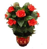Blooming Rose Bush Remote Control 10 Flowers Battery Version Magic Tricks Flower Magic Stage Party Comedy