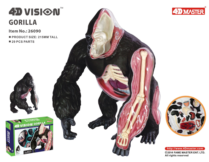 Silver back apes 4d master puzzle Assembling toy Animal Biology organ anatomical model medical teaching model
