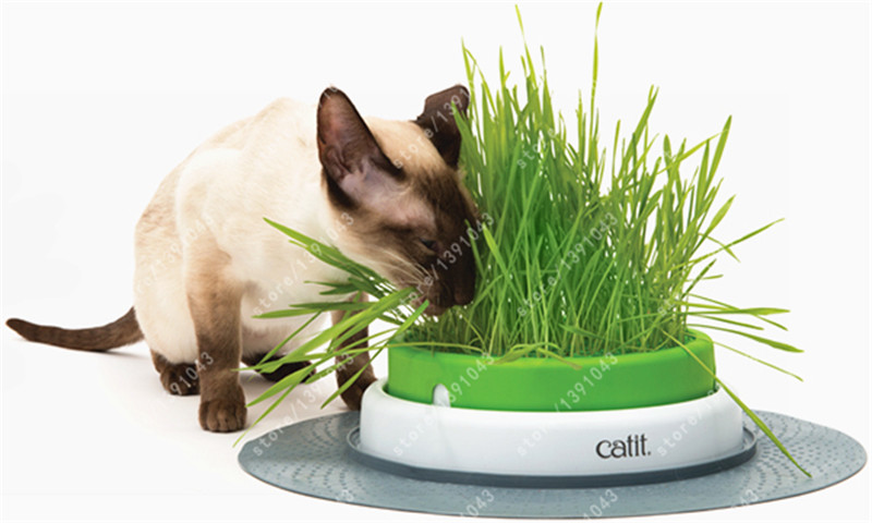 100% real 50 cat grass wheat herb NO-GMO vegetable Plant Seed for Home Garden