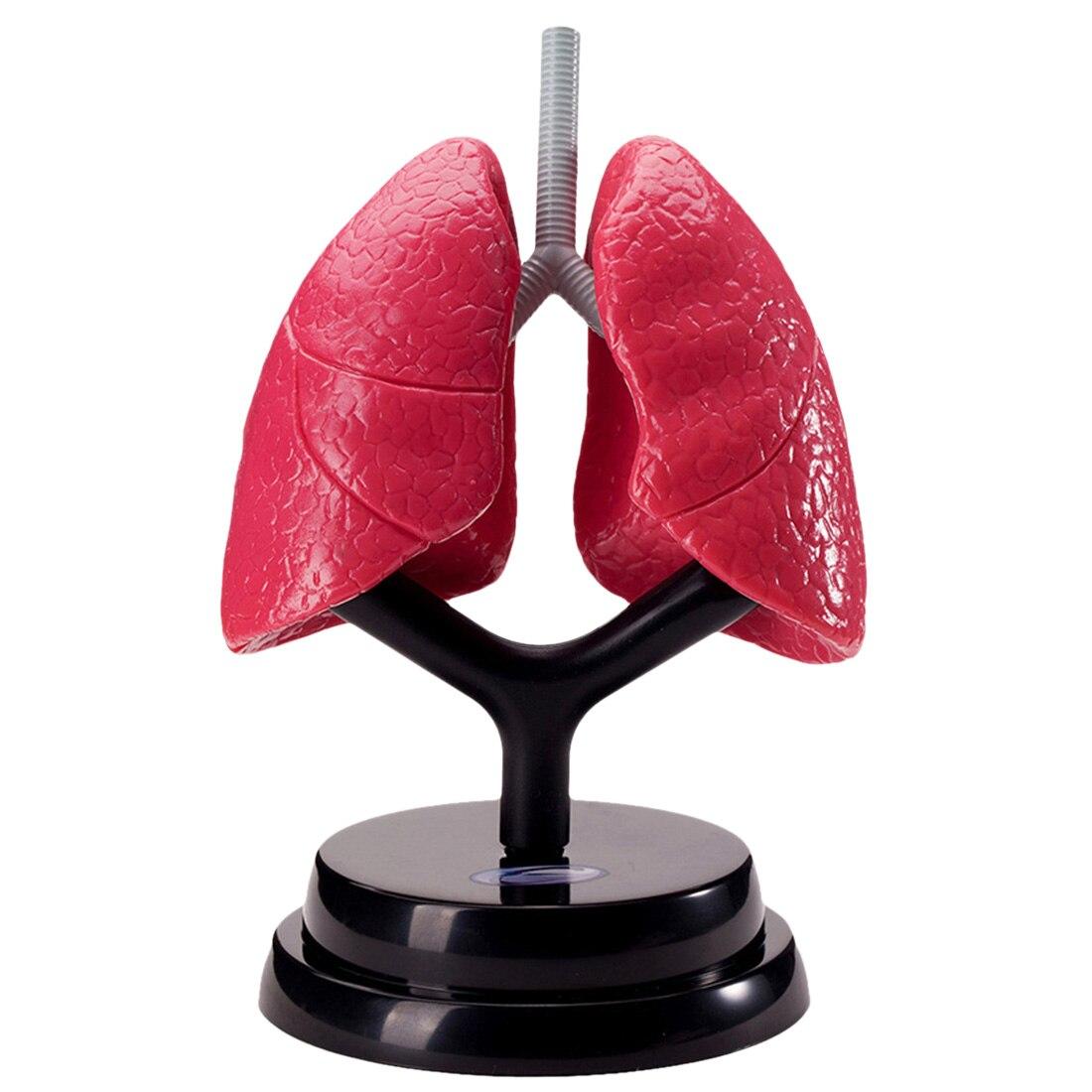 Surwish bricolage modèle respiratoire humain enfants populaire Science expérience vapeur tige jouet ensemble