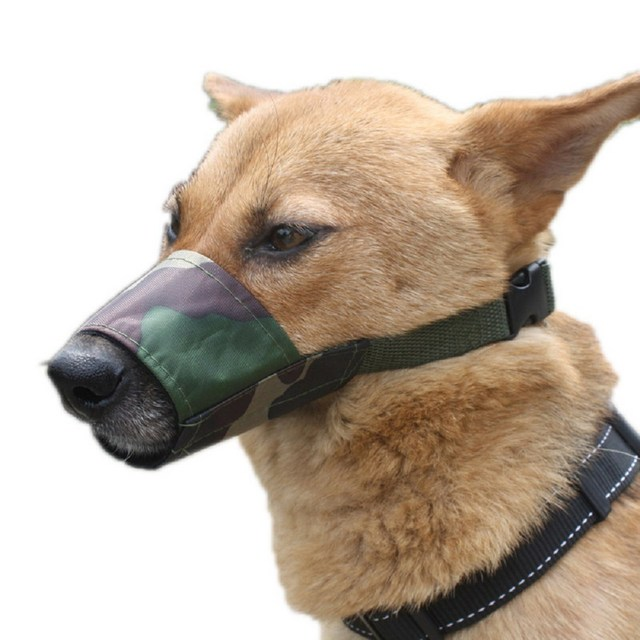 Dog Grooming Oxford