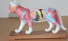 Buy cat anatomy and get free shipping on AliExpress.com