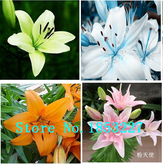 Online Buy Wholesale cheap garden supplies from China cheap garden