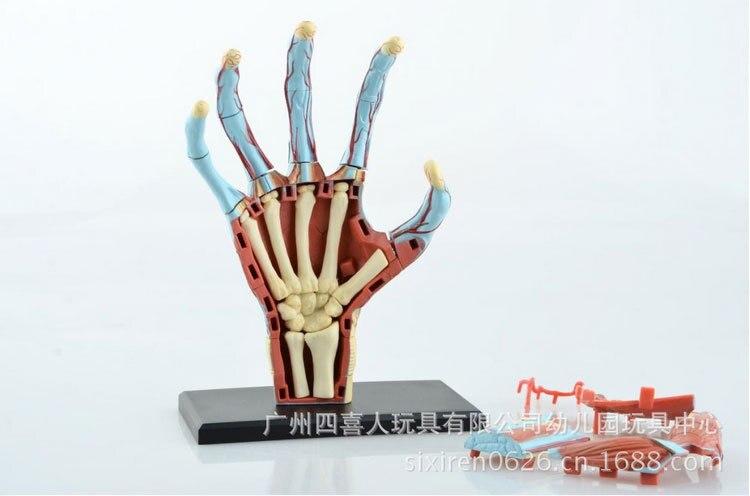 28pcs Assembly 4d Master Mini Human Hand Anatomy Model Puzzle