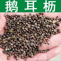 2017 Time-limited Sementes Tree Seeds Collected Authentic Daughter Seed Uncompleted Hornbeam Sprout High Real Shot 200g / Pack