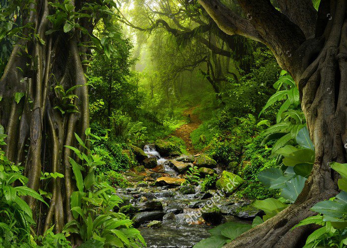 Tropical Jungle With River Photo Backdrop Vinyl Cloth High