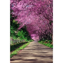 Laeacco Spring Blooming Flowers Trees Park Scenic Baby Photography Background Customized Photographic Backdrops For Photo Studio