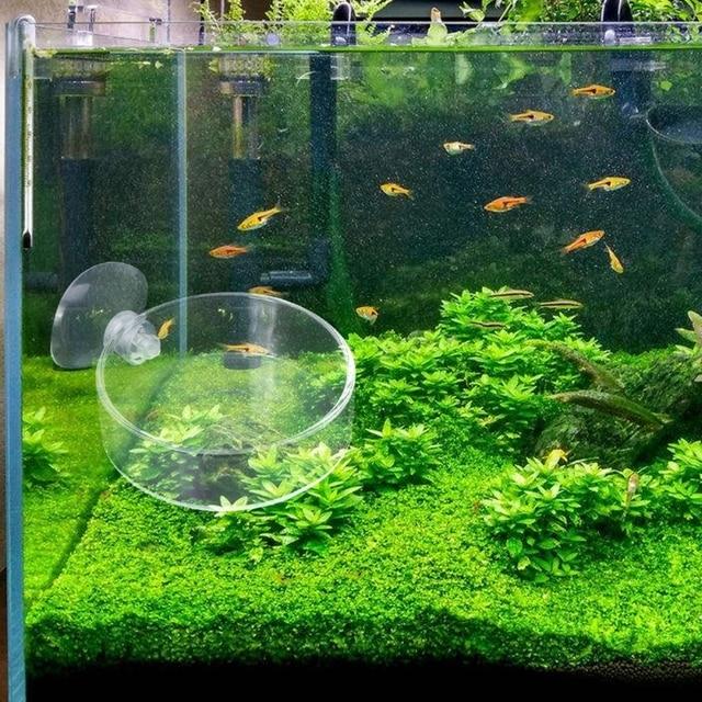 7bf60beb5 New Arrival Fish Tank Feeder Aquarium Shrimp Glass Feeding Bowl Clear Dish  Tray