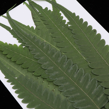 12 Pieces Pressed Fern Leaves, Natural Real Dries Flower Leaves for DIY Crafts