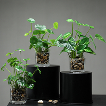 Xuanxiaotong Green Artificial Plants Glass Bonsai Simulation Clover Lucky Grass Potted for Office Desktop Home Table Decor