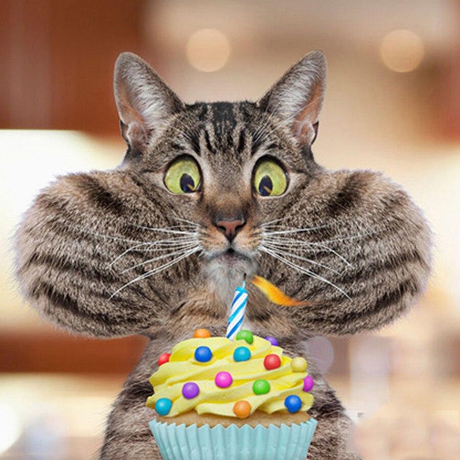 Про душу, с днем рождения фото с котиком