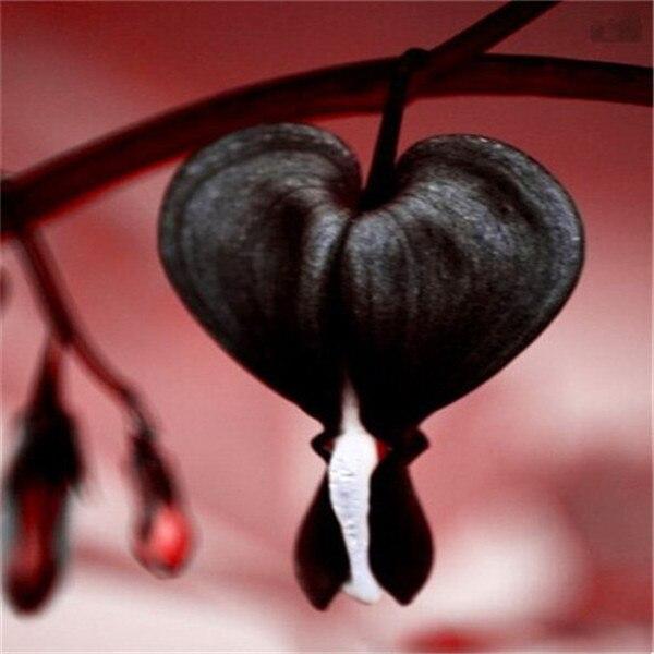 100 шт сердце бонсай из цветов Dicentra spectabilis сладкое сердце бумажник пион цветы для сада растение редкий оттенок многолетний цветок