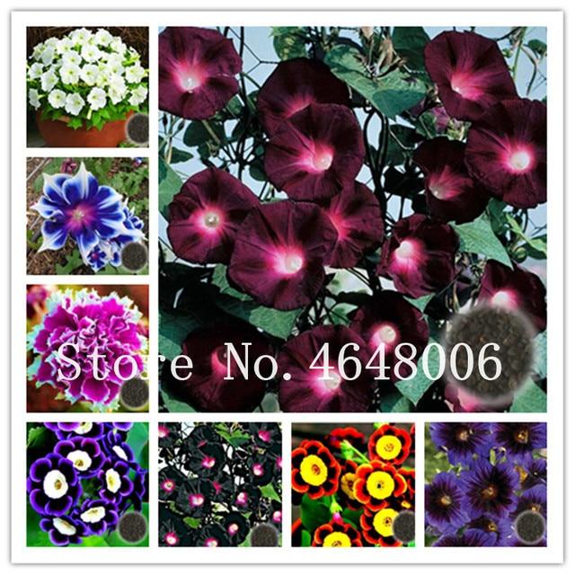 Big Promotion! 50 Pcs Hanging Petunia Bonsai Mixed Rare Bonsai Pot Charming Morning Glory Flower Plantas For Home Garden Decor