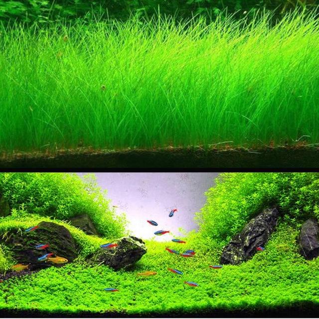 b956fecfa Aquarium Landscape Ornament Aquatic Water Grass Mini Leaf Live Plant Fish  Tank Decoration Home Garden