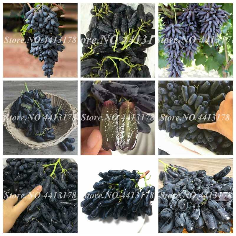 50 pcs/bag Bonsai Grape Miniature Grape Vine Potted Organic Fruit Tree Succulent Plants Sweet Food Easy to Grow Plant for Garden