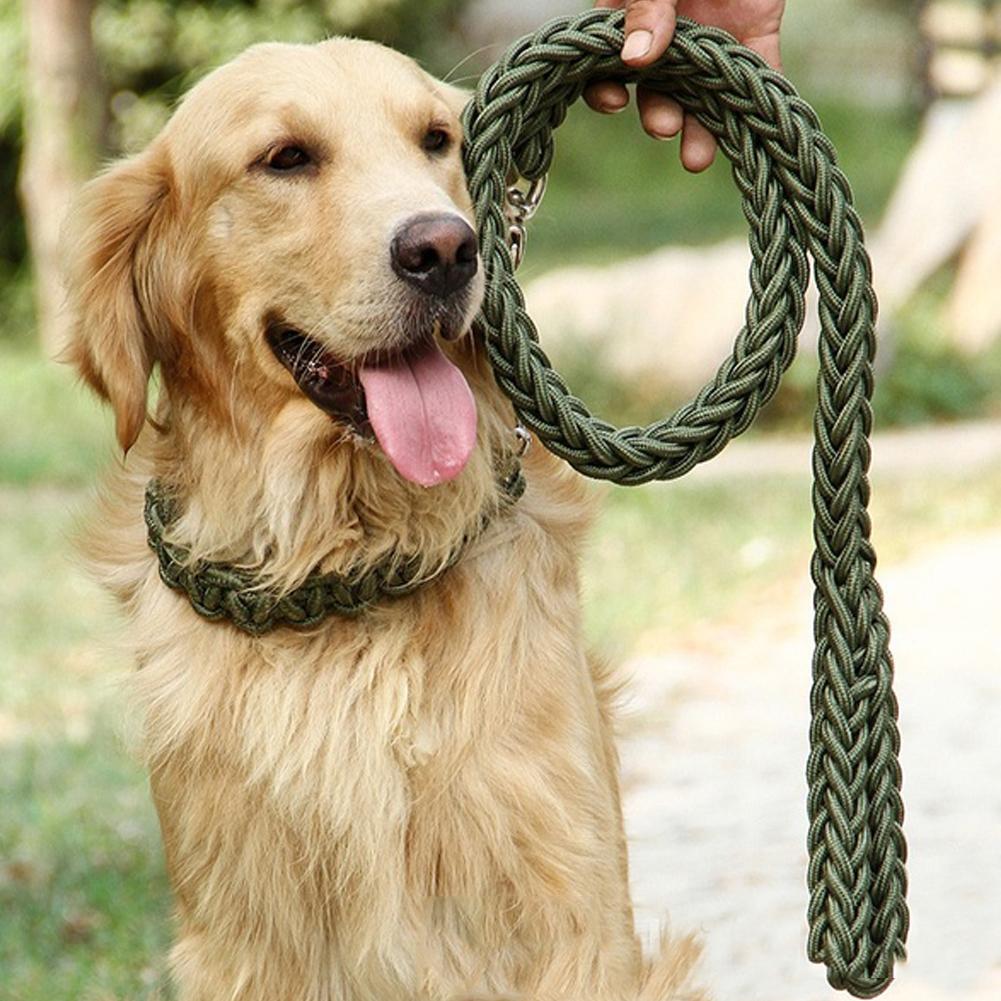 cane grande-acquista a poco prezzo cane grande lotti da fornitori