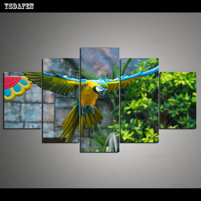 HD Printed Painting Canvas Printing Parrot painting Room decor print poster picture canvas Framed Art PA-001