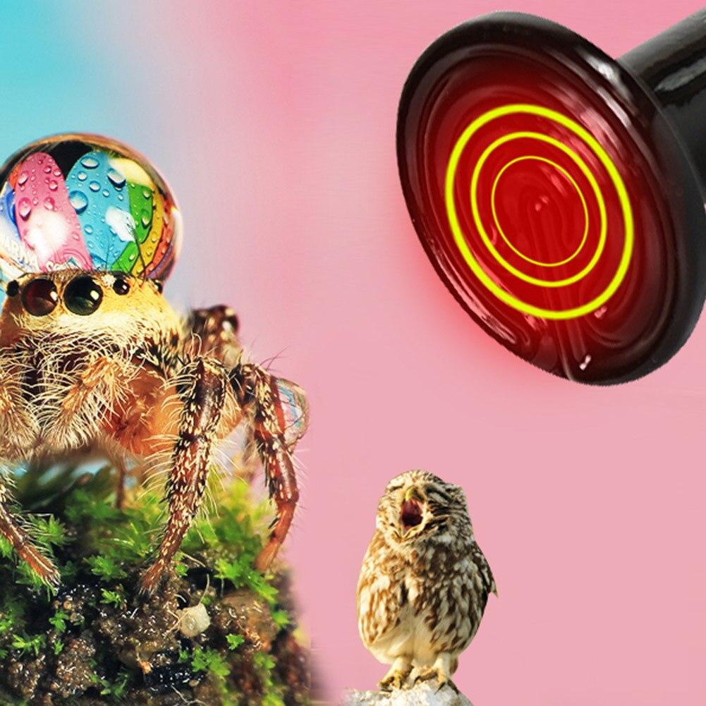 Newest Pet Heating Bulb Ceramic Heating Lamp Infrared Ceramic Emitter Heat Lamps Tortoise Lizard Spider Reptile Box Warmer