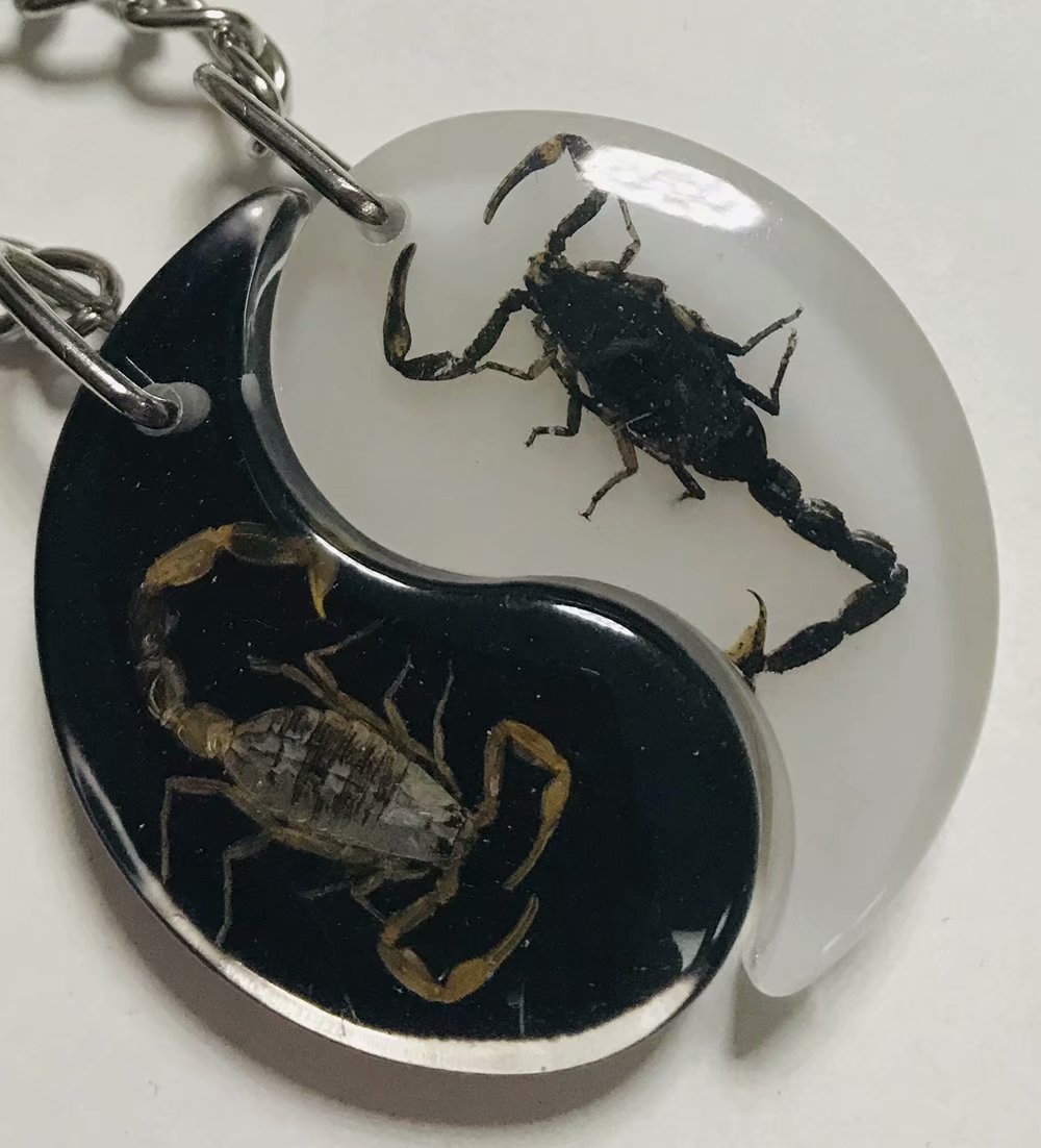 Magic Scorpion Insect Taxidermy Paperweight