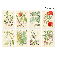 Vintage floral and seeds fruit set watercolor style art prints 8 in 1 Wall Art Plant Decor Green Plant Leaf bontanical unframed
