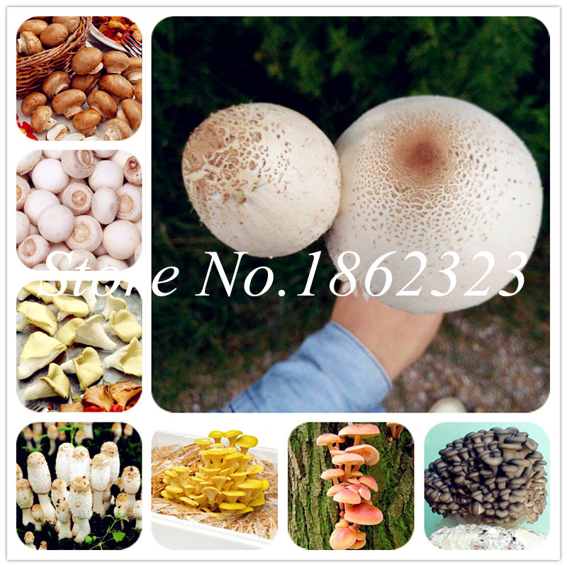 US $0.26 60% OFF|100 Pcs Organic Delicious Giant Mushroom Bonsai,Funny Succlent Plant Edible Health Vegetables Mushroom plants For Happy Farm-in Bonsai from Home & Garden on Aliexpress.com | Alibaba Group
