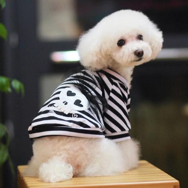 Vêtement à la mode pour Yorkshire ou Chihuahua