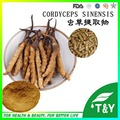 Cordyceps Sinensis /caterpillar fungus Powder /Capsule 500mg * 1000pcs