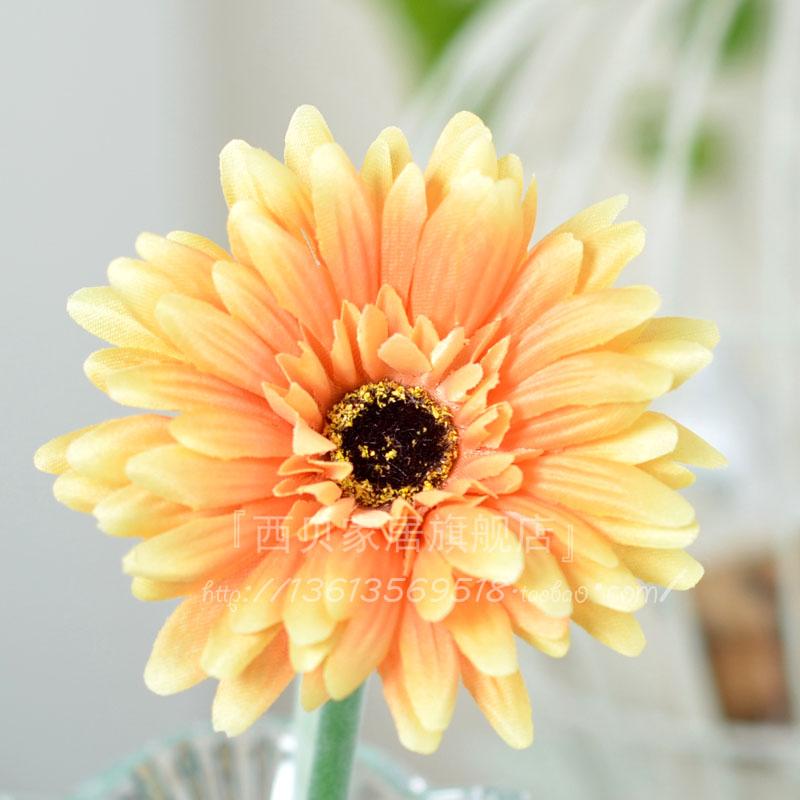 Цветы герберы цена