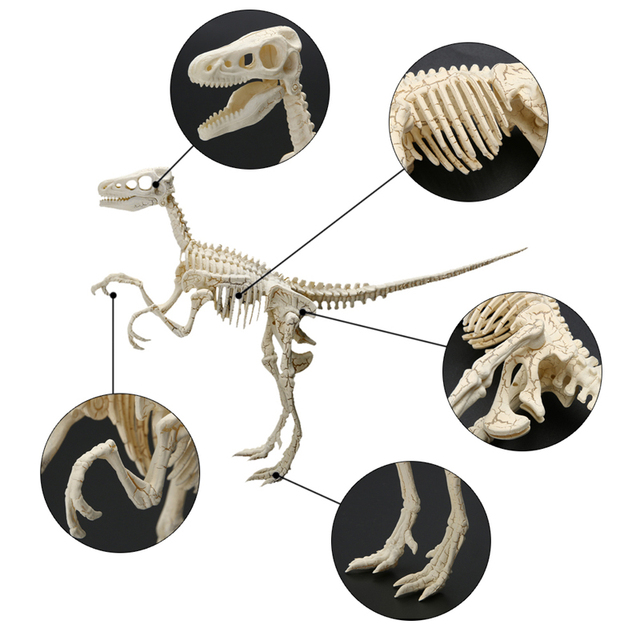 US $3 22 27% OFF|Dinosaur Figures Feature Toys Assorted Plastic Dinosaurs  Fossil Skeleton Dino Figures Kids Toy Modle Collection Children -in Action  &