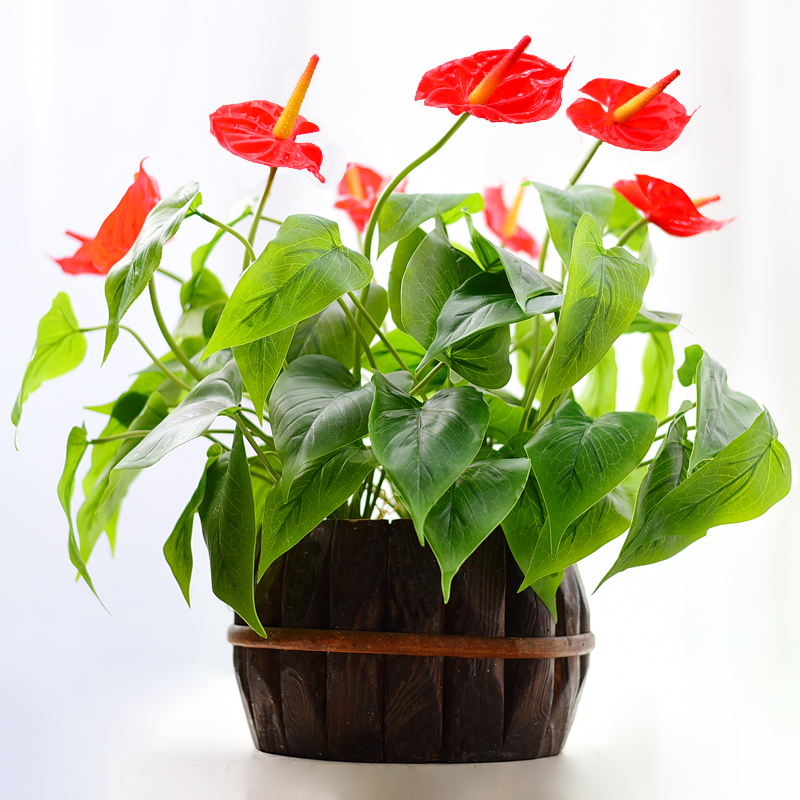 INDIGO- Anthurium Bouquet Anthurium With Leave Root Calla Real Touch Wedding Display Flower Artificial Home Flower Wholesale