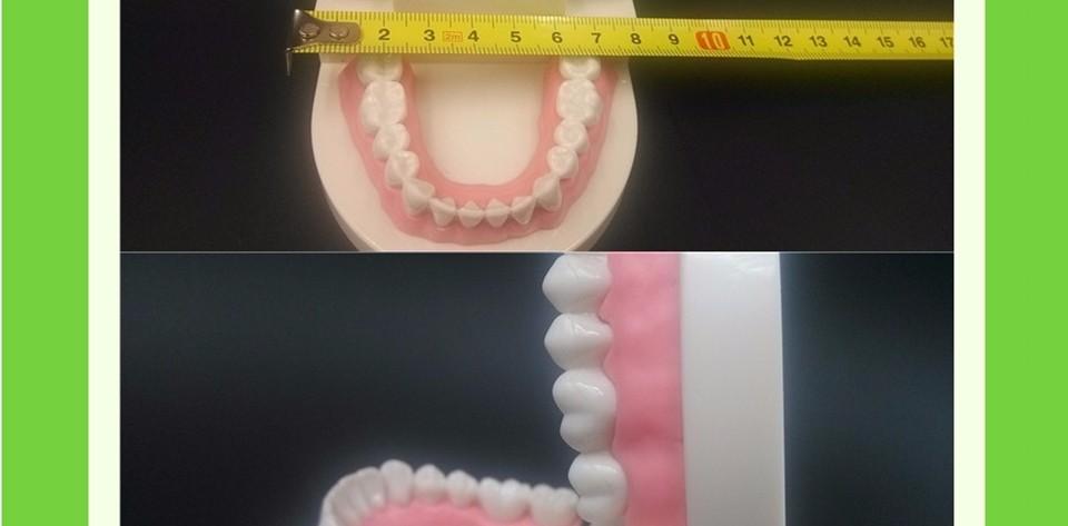 Teeth Model0000014